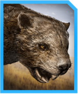 Marsupial Lion-min