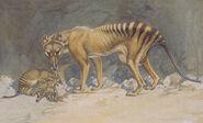 Thylacine with pups