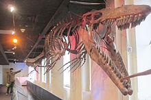 220px-JVBA Mosasaur 6-09-2010