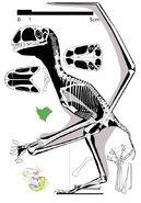 Anurognathus-recon2013-588 4e69