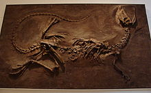 220px-DilophosaurusROM1