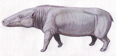 Anthracotherium10