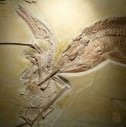 Ancient-fish-pterosaur