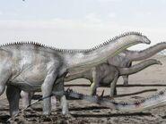 Brontosaurus NT