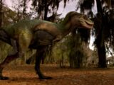 Albertosaurus/Gallery