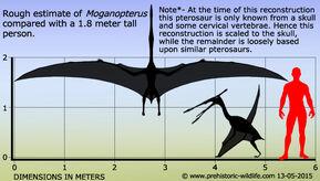 Moganopterus-size