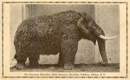 Albany-mastodon-1000x616