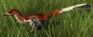 Velociraptor mongoliensis (Red Baron)