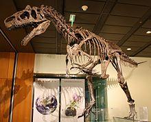 WLA hmns Allosaurus