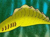 Haikouella lanceolata