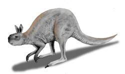 Procoptodon BW
