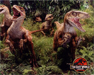 The-Lost-World-Raptors