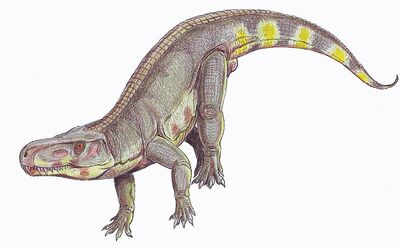 Batrachotomus1DB