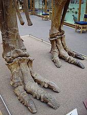 170px-Iguanodon feet