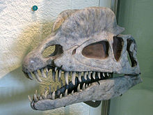 220px-Dilophosaurus skull cast