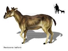 Paratoceras tedfordi by karkemish00-d5b9mtm.jpg