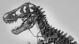 T. rex The King of Time (and Pop Culture)