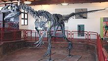 Allosaurus atrox Cleveland-Lloyd Quarry