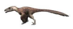 Utahraptor ostrommaysorum for wikipedia by fredthedinosaurman-dbq2uyf.png
