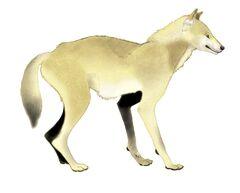 Canis etruscus restoration.jpg