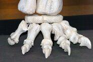MZ-Tapuiasaurus-Macedo-031-11-fe184 90c9