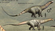 Apatosaurpreh