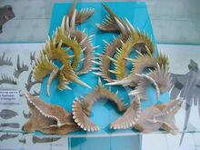 800px-Manticolepis subrecta