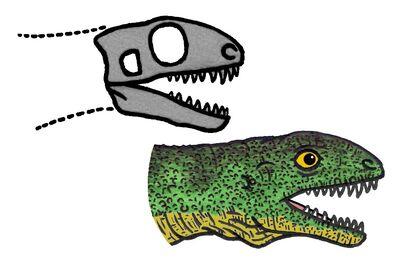 Acleistorhinus pteroticus head