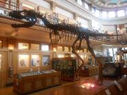 Redpath museum gorgosaurus