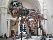 2005-0814-t-rex-skeleton
