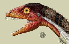 Daemonosaurus-face.jpg