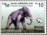 Elephas hysudricus