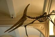 Pteranodon-by-Ryan-Somma