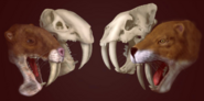 Life reconstructions of Thylacosmilus and Smilodon