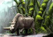 1236240977 Rhino on holiday web