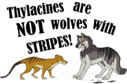 Thylacines aren t wolves by carolzilla d60cbhf