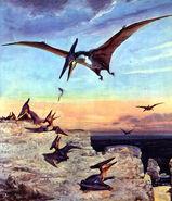 Pteranodon young by zdenek burian 1960