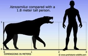 Xenosmilus-size