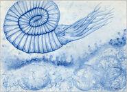 Devonian-Blues-Ammonite-bart-castle