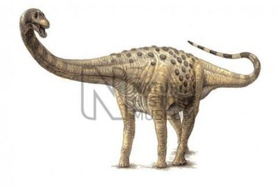 Magyarosaurus-