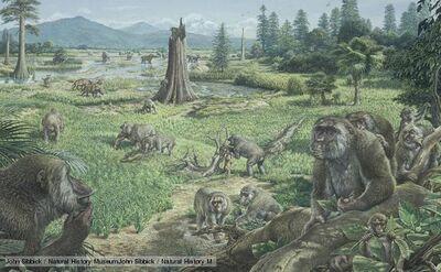 Miocene 1