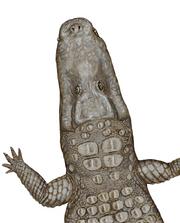 Life restoration of Crocodylus thorbjarnarsoni
