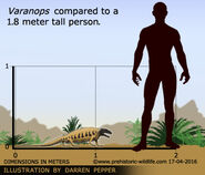 Varanops-size
