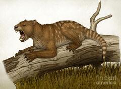 Thylacoleo-carnifex-a-marsupial-heraldo-mussolini.jpg
