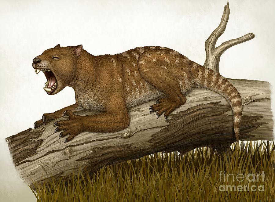 Thylacoleo Dinopedia Fandom Powered By Wikia