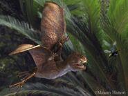 Anurognathus 20120811 7 3d48