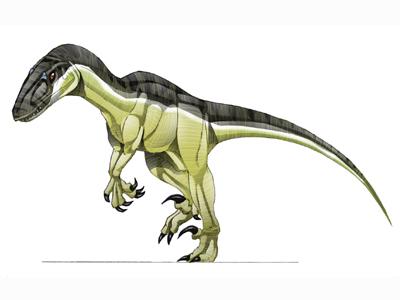 Variraptor mechinorum