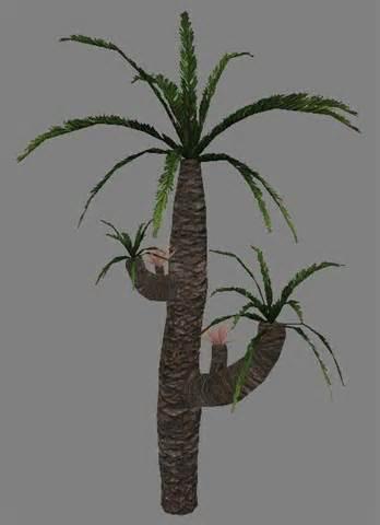 Williamsonia tree