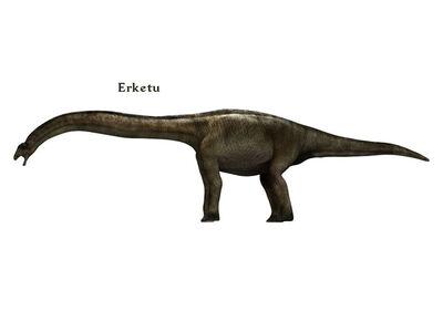 Erketu
