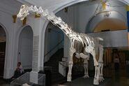 MZ-Tapuiasaurus-Macedo-031-11-fe141 8a7f